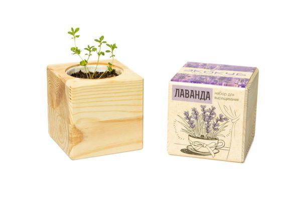 Набор для выращивания «Экокуб», лаванда